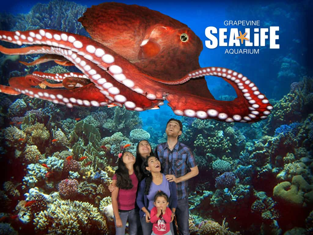 SEA LIFE Aquarium in Grapevine TX - Dallas Fort Worth Metroplex