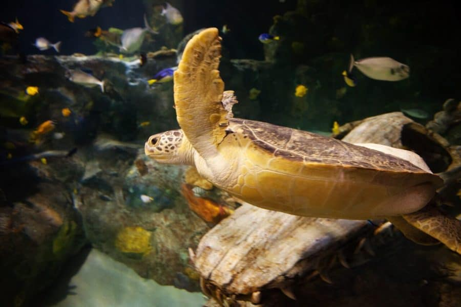 Free Tickets To Sea Turtle Rescue Center in DFW @sealifegrpevine